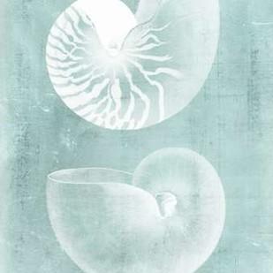 Nautilus on Spa I Digital Print by Vision Studio,Decorative