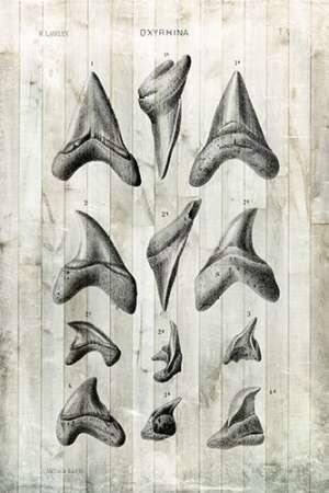 Relic Hunter II Digital Print by Vision Studio,Realism