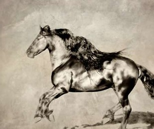 Wind Blown Mane III Digital Print by PHBurchett,Realism