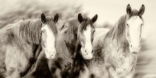 Three Amigos II Digital Print by PHBurchett,Illustration