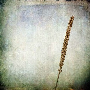 Grunge Remnants I Digital Print by Malek, Honey,Impressionism