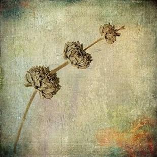 Grunge Remnants IV Digital Print by Malek, Honey,Impressionism