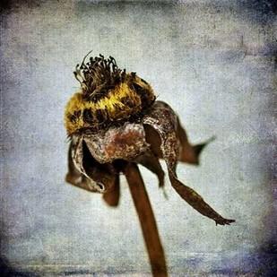 Grunge Remnants VII Digital Print by Malek, Honey,Impressionism