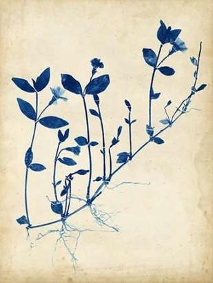 Indigo Leaf Study II Digital Print by Vision Studio,Decorative