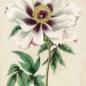 Imperial Floral II Digital Print by Vision Studio,Decorative