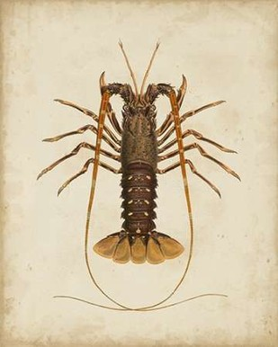 Crustaceans II Digital Print by Sowerby, James,Decorative