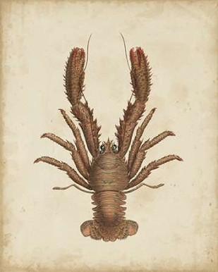 Crustaceans III Digital Print by Sowerby, James,Decorative