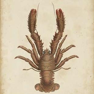 Crustaceans III Digital Print by Sowerby, James,Decorative