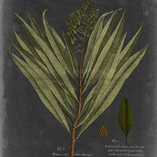 Foliage Dramatique II Digital Print by Vision Studio,Decorative