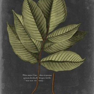 Foliage Dramatique III Digital Print by Vision Studio,Decorative
