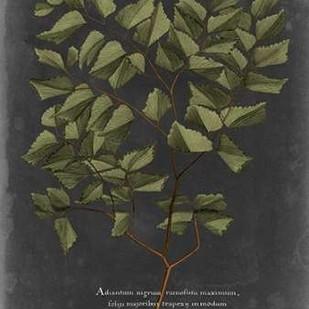 Foliage Dramatique V Digital Print by Vision Studio,Decorative