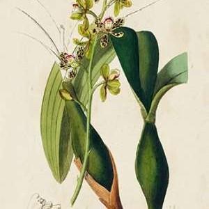 Spring Orchid III Digital Print by Ridgeway,Decorative