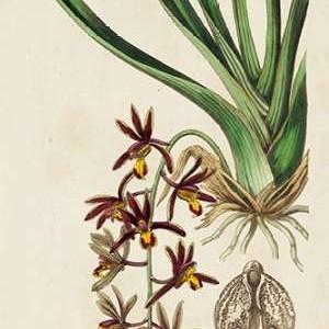 Spring Orchid V Digital Print by Ridgeway,Decorative