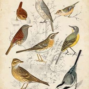 Gathering of Birds I Digital Print by Lubbert, G.,Decorative