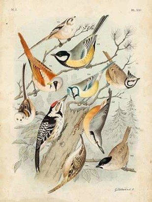 Gathering of Birds II Digital Print by Lubbert, G.,Decorative