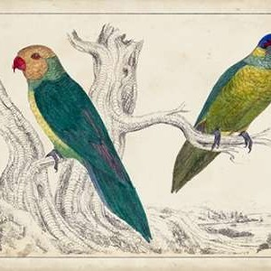 Parrot Pair II Digital Print by Unknown,Decorative