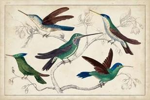 Hummingbird Gathering I Digital Print by Unknown,Decorative