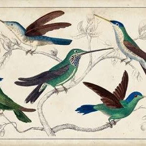Hummingbird Gathering I Digital Print by Unknown,Decorative