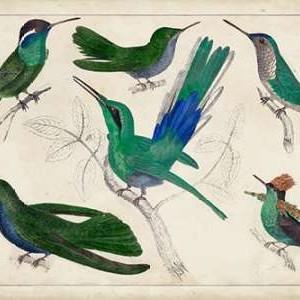 Hummingbird Gathering II Digital Print by Unknown,Decorative