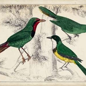 Tropical Bird Trio I Digital Print by Unknown,Decorative