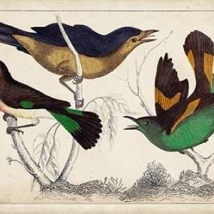 Tropical Bird Trio II Digital Print by Unknown,Decorative