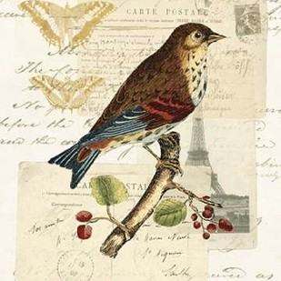 Naturalists Collage II Digital Print by Vision Studio,Decorative
