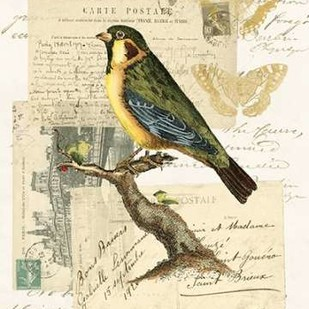 Naturalists Collage III Digital Print by Vision Studio,Decorative