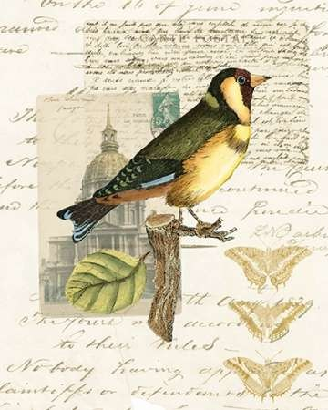 Naturalists Collage IV Digital Print by Vision Studio,Decorative