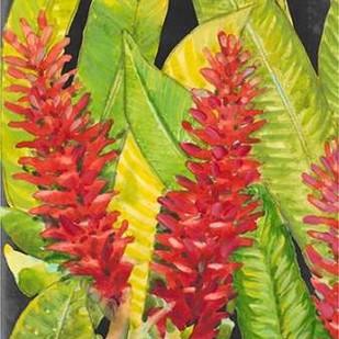 Red Tropical Flowers I Digital Print by Otoole, Tim,Decorative