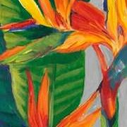 Bird of Paradise Triptych II Digital Print by Otoole, Tim,Decorative