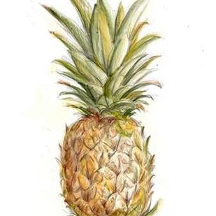 Pineapple Sketch II Digital Print by Harper, Ethan,Decorative