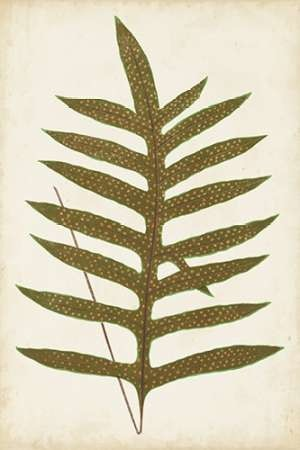 Fern Family VIII Digital Print by Lowe,Decorative