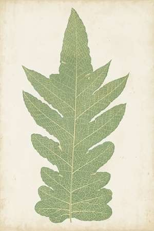 Fern Family IX Digital Print by Lowe,Decorative