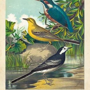 King-fisher & Wagtails Digital Print by Cassell,Decorative
