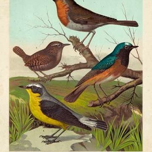 Robin, Wren & Redstart Digital Print by Cassell,Decorative