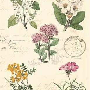 Botanical Journal II Digital Print by Vision Studio,Decorative