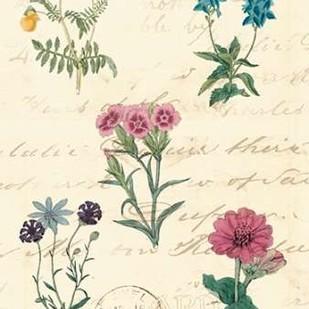 Botanical Journal III Digital Print by Vision Studio,Decorative