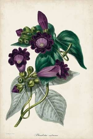 Plum Foxgloves Digital Print by Paxton,Decorative