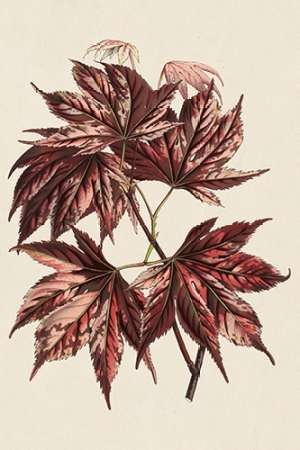 Japanese Maple Leaves II Digital Print by Stroobant,Decorative