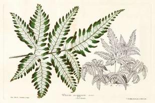 Fern Leaf Foliage II Digital Print by Stroobant,Decorative