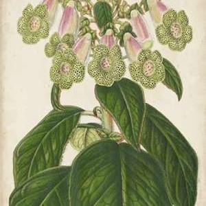 Foxglove Botanical Digital Print by Stroobant,Decorative
