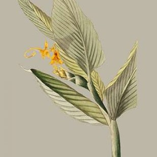 Botanical Cabinet III Digital Print by Cooke, E.W.,Impressionism
