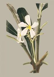 Botanical Cabinet IV Digital Print by Cooke, E.W.,Impressionism