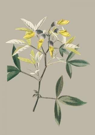 Botanical Cabinet VI Digital Print by Cooke, E.W.,Impressionism