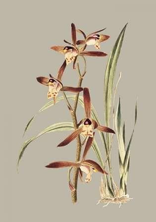 Botanical Cabinet VII Digital Print by Cooke, E.W.,Impressionism