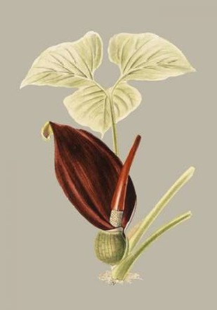 Botanical Cabinet VIII Digital Print by Cooke, E.W.,Impressionism
