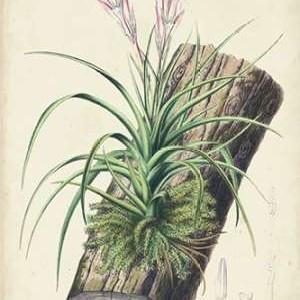 Orchid Delight II Digital Print by Severeyns, George,Impressionism