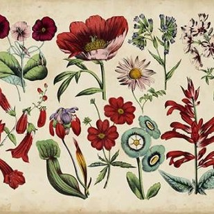 Antique Botanical Chart I Digital Print by Unknown,Decorative