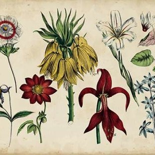 Antique Botanical Chart III Digital Print by Unknown,Decorative