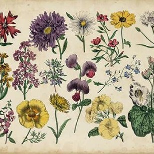 Antique Botanical Chart IV Digital Print by Unknown,Decorative